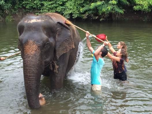 scrubbing-elephants-2016