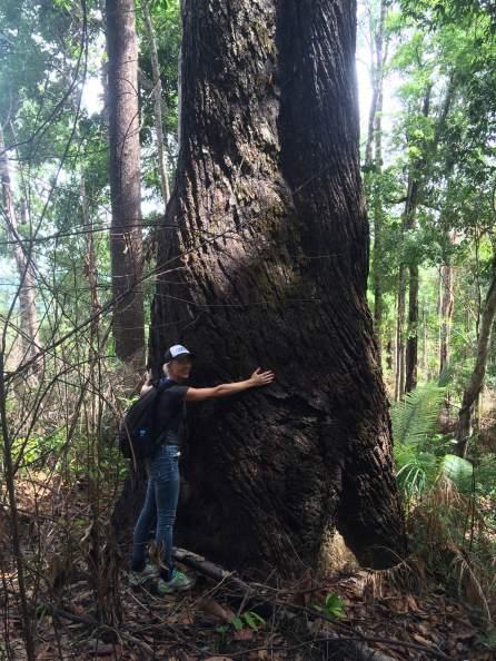 illegal-logging-cambodia-2016
