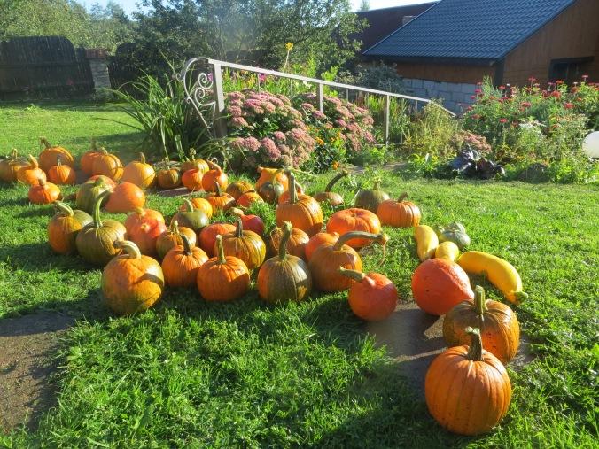 pumpkins-2014