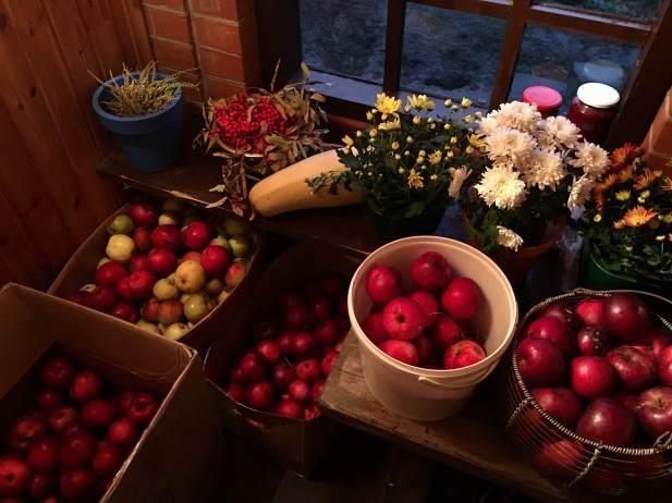 apple-harvest-2016