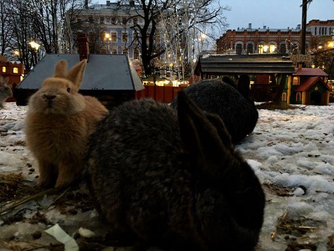 rabbits-christmas-2016