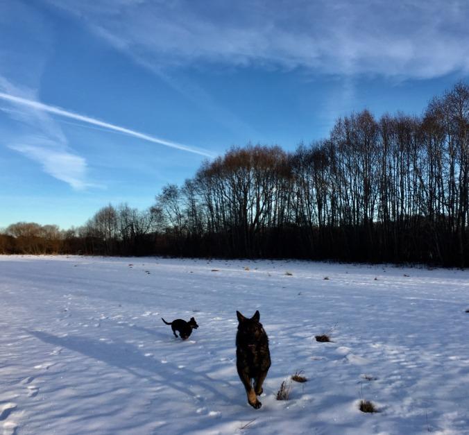 dogs-big-meltdown-2017