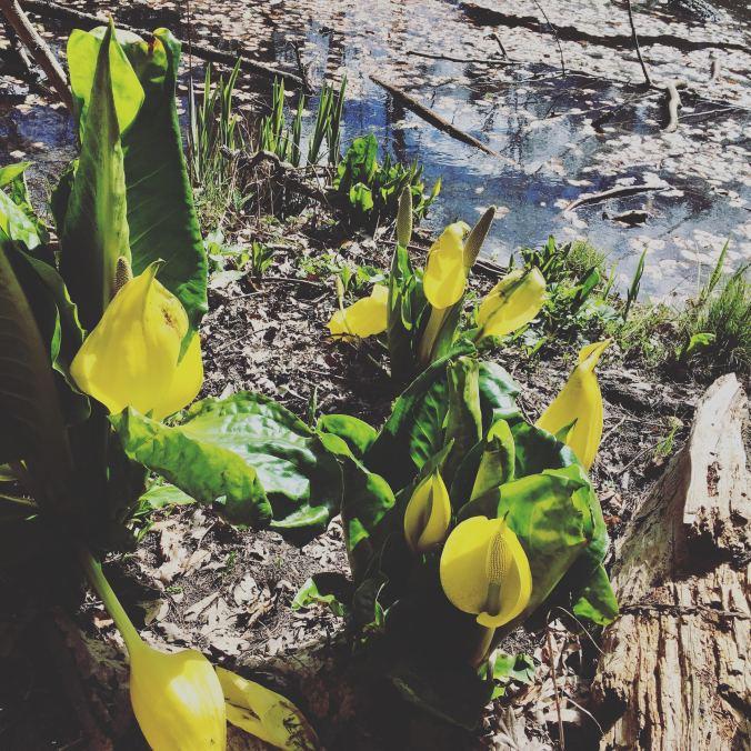 spring_essengers